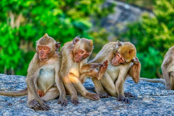 Monkeys outside of Khao Luang Cave