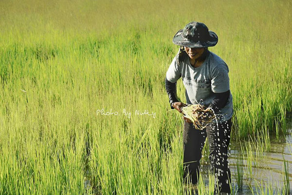 Rural Thai Farmer