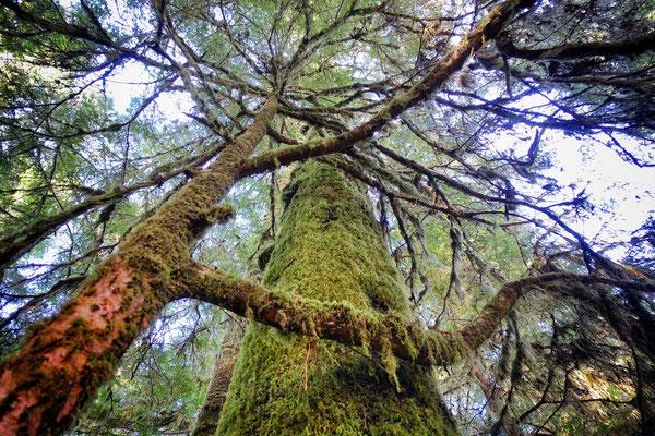 Pacific Rim Rainforest