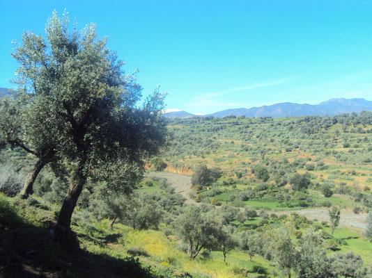 Paysage du Haut Atlas, Maroc