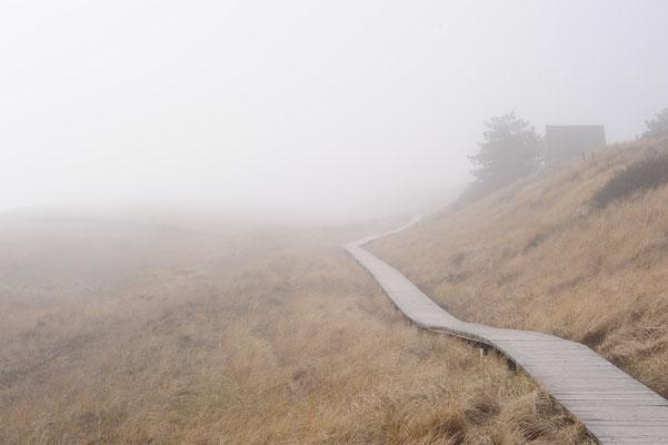Dünenwege im Nebel