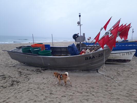 Fischerboote sind spannend