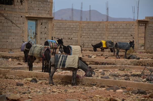 Der Eselparkplatz am Rand des Wochenmarktes von Tinzouline im Draa Tal