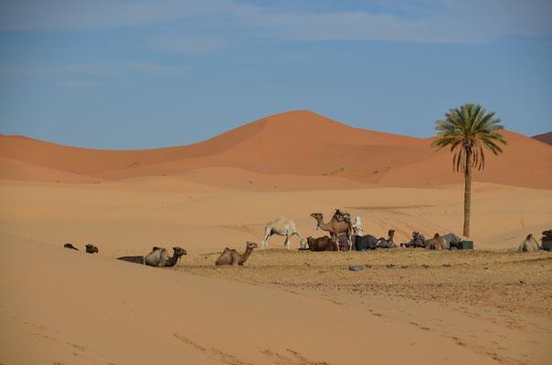 Erster Blick aus unserer Unterkunft in die Sahara