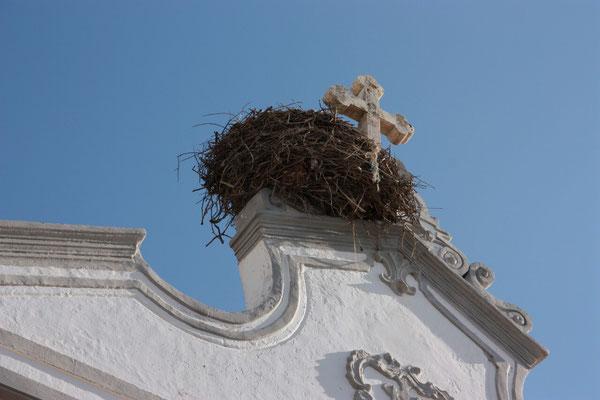 Immer wieder sieht man Storchennester, besonders beliebt bei den Störchen sind die Kirchtürme.