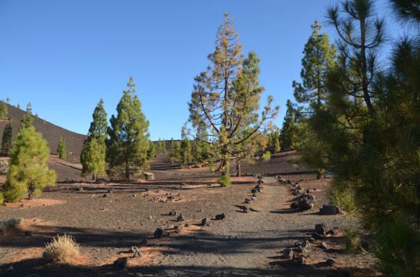 Gut angelegte Wanderwege führen durch die Caldera