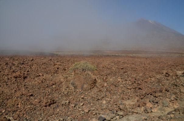 und wieder mal in der kargen Teide-Landschaft