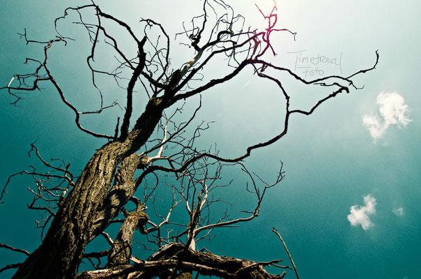 Trockene Akazie im Nationalpark. Foto: Esther Knipschild