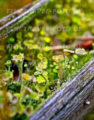 Miniaturwald. Foto: Esther Knipschild