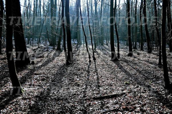 Tauwetter im Nationalpark Kellerwald Edersee. Foto: Esther Knipschild