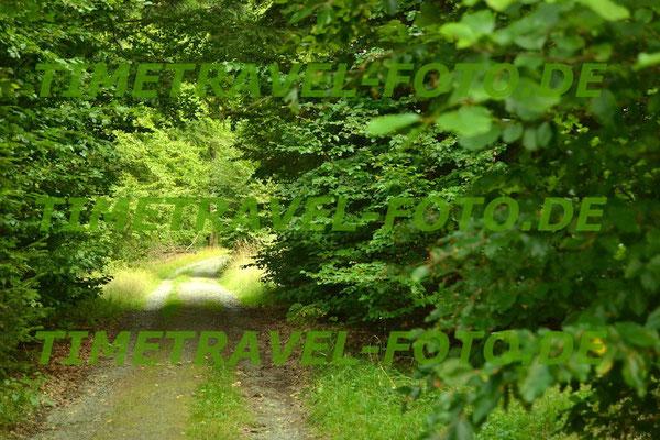 Grün überspannter Waldweg im Nationalpark Kellerwald-Edersee. Foto: Esther Knipschild