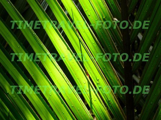 Palmblatt im neuseeländischen Regenwald am Punakaiki River. Foto: Esther Knipschild