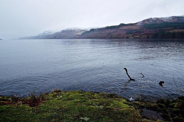 Nessie. Foto: Esther Knipschild