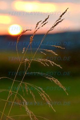 Gras in der Sonne. Die Felder der Kulturlandschaft eröffnen neue Perspektiven. Foto: Esther Knipschild