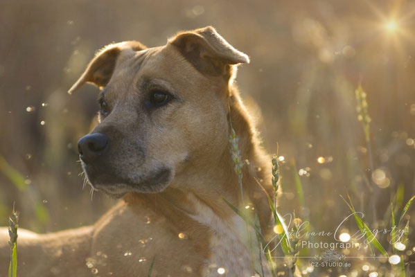 Wunderschöne Hundefotos - Juliane Czysty Fotografin zwischen Rotenburg und Visselhövede