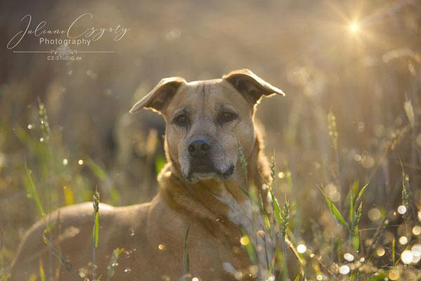 Outdoor Hundefotografie Visselhövede