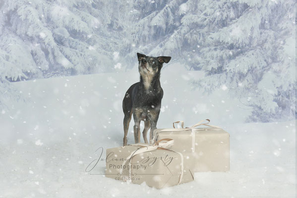 Hunde Fotos Im Studio Visselhövede