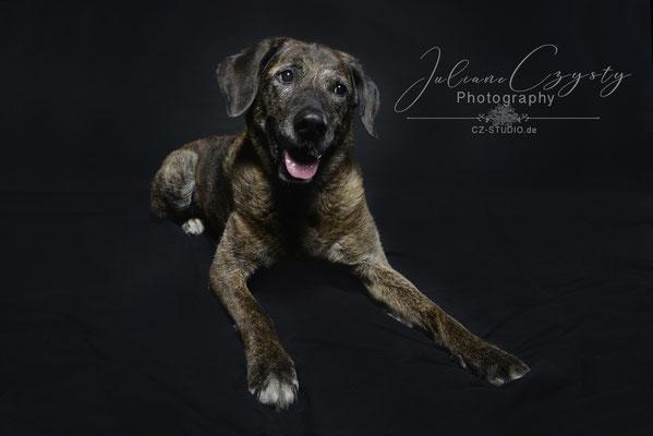 Wunderschöne Hundefotos