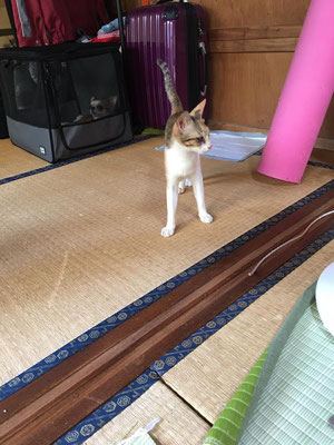 7/24のブログ|Ryu Heyzoボイトレブログ