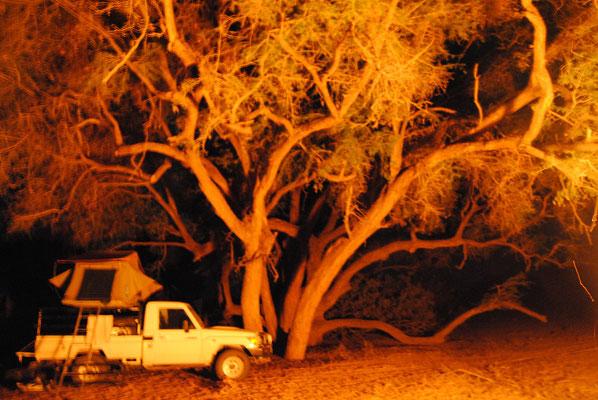 Busch bei Nacht