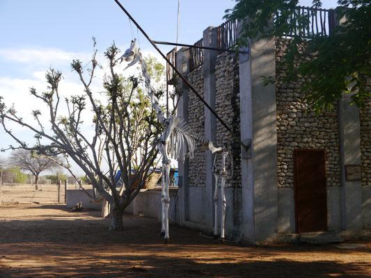 Giraffenskelett auf Harnas