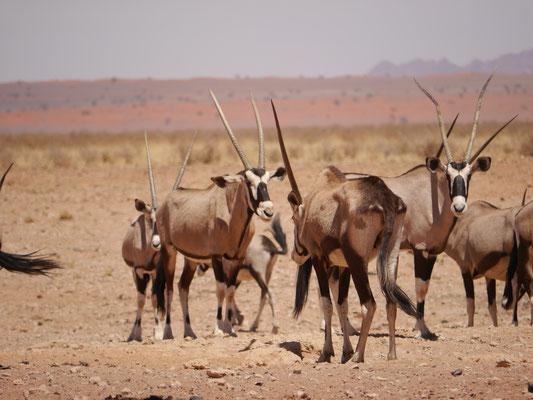 Oryxversammlung