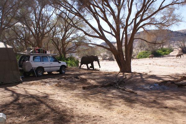 Buschcamping hautnah bei den Dickhäutern