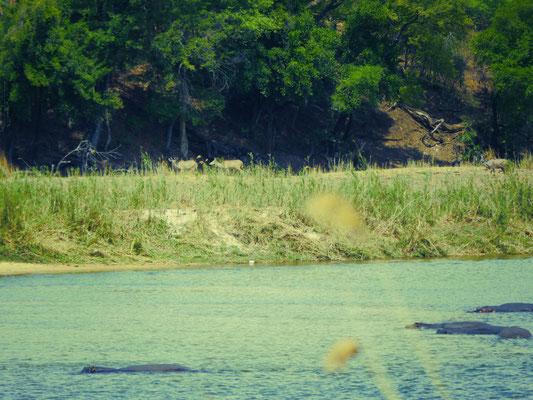 Treffen am Kavango