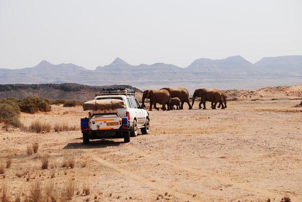 Mit Klaus, dem Elefantenfinder unterwegs.