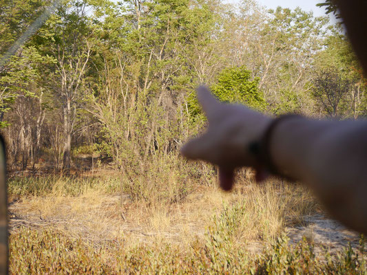 hier versteckt sich ein Elefant