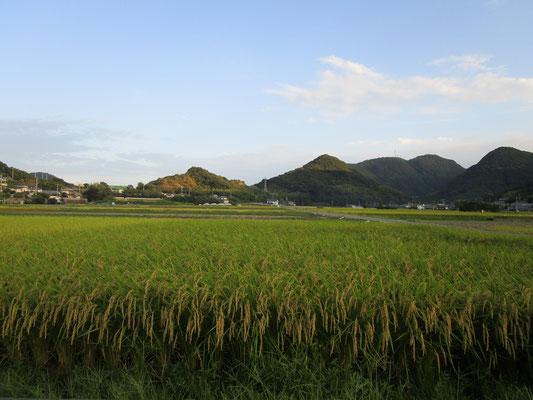 農園の田園風景