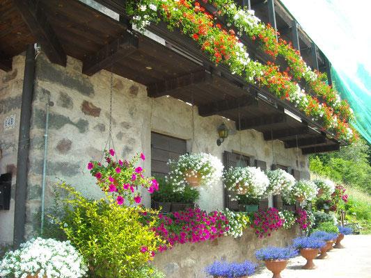 Schöner Blumenschuck an den Häusern