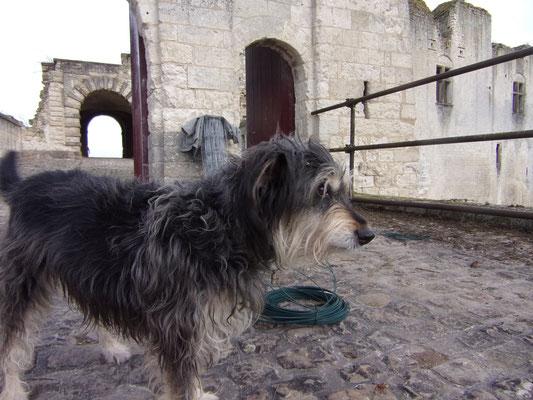 Château de Picquigny la mascotte surveille les travaux tel Rantanplan surveille les Dalton