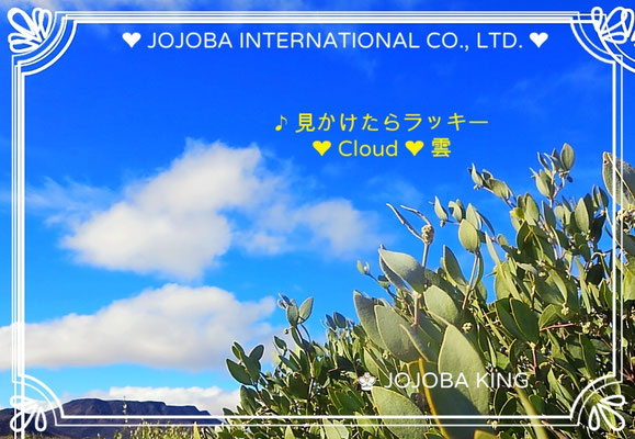❦ JOJOBA ♥ Spiritual Beauty ♥ Father's Day 父の日 ♥