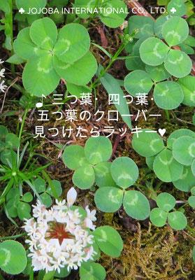 "❦ JOJOBA Spiritual Beauty ♥☆"" 三つ葉・四つ葉・五つ葉のクローバー"