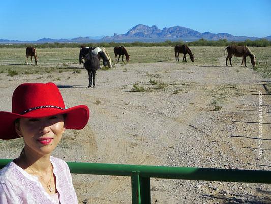 ♔ 馬の牧場
