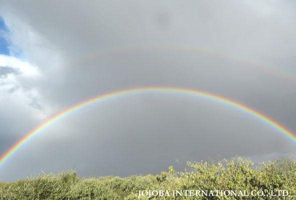 ♔ 虹 於: アリゾナ州ハクアハラヴァレー