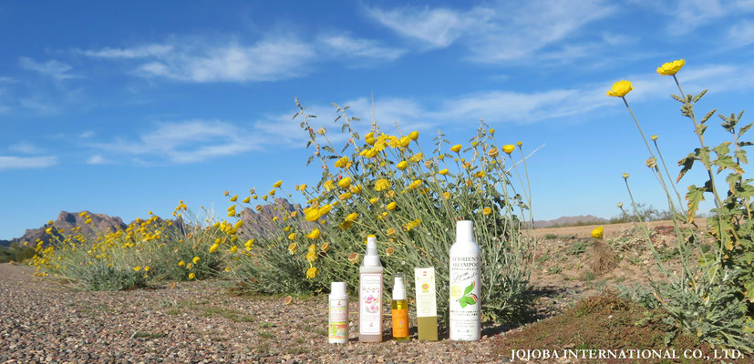 ♔ Jojoba with Our Jojoba items