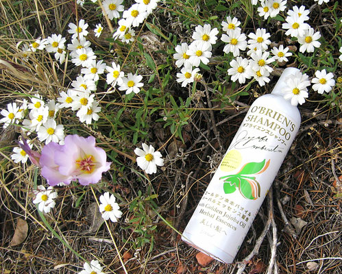 "♔ オブライエンズシャンプー O'BRIEN'S SHAMPOO  ""Mystic dew"" - a golden Oasis for your skin."