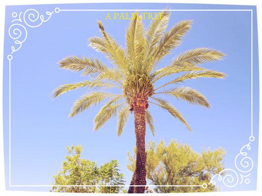 ❦ 椰子の木