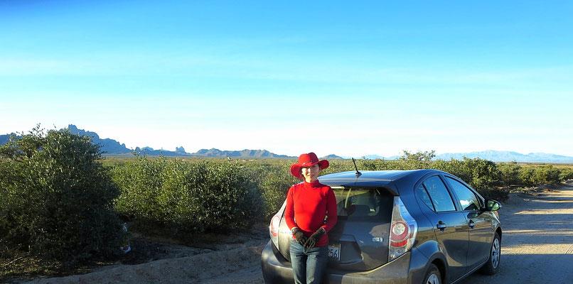 ♔ ハイブリッド車とアリゾナ砂漠の神秘の植物原種ホホバ JOJOBA ORIGINAL SPECIES(純粋種Sayuri原種ホホバ)渡邊さゆり(中央)