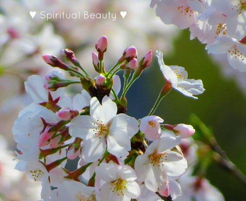 ❦ Spiritual Beauty ♥ JOJOBA ♥ SPRINGTIME ♥