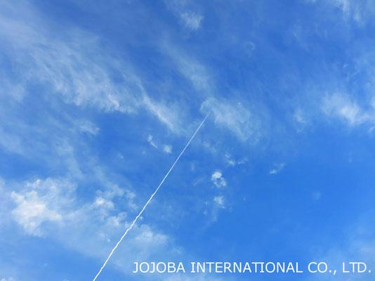 ♔ 見上げれば上空は幾機もの飛行機雲。空が広く飛行機雲も悠々と飛行している様です。