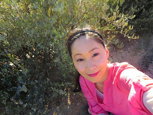 ♔ アリゾナ砂漠の神秘の植物原種ホホバ JOJOBA ORIGINAL SPECIES(純粋種Sayuri原種ホホバ)と渡邊さゆり