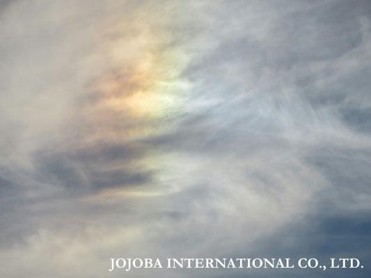 ♔ Rainbow 於: 原種ホホバの聖地アリゾナ州ハクアハラヴァレー