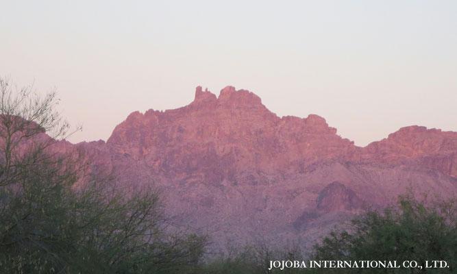 ♔ ★ 原種ホホバの聖地 アリゾナ州ハクアハラヴァレー