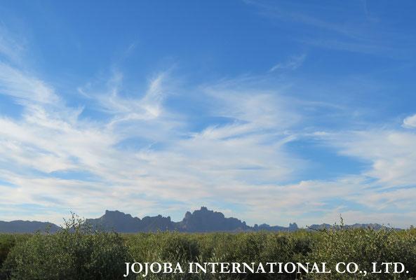 ♔ 私達の原種ホホバ種子油は、聖地・母なる大地(ホホバの自生地)アリゾナ州ハクアハラヴァレー(鉱泉地)原産です