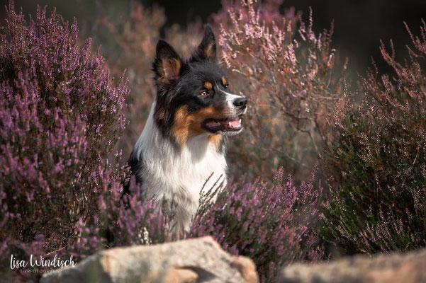Bild: Lisa Windisch Tierfotografie