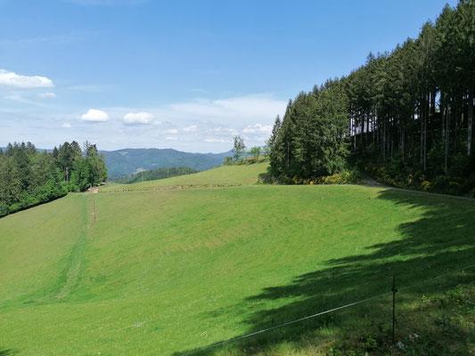 Schwarzwald | Hausacher Bergsteig