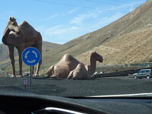 Ein klarer Hinweis auf unser Ziel: Kamele reiten!